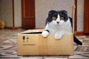 in a box